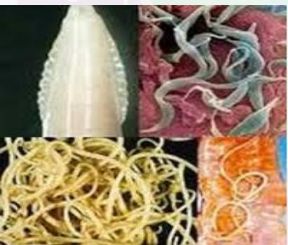 очищение от паразитов в домашних условиях народными